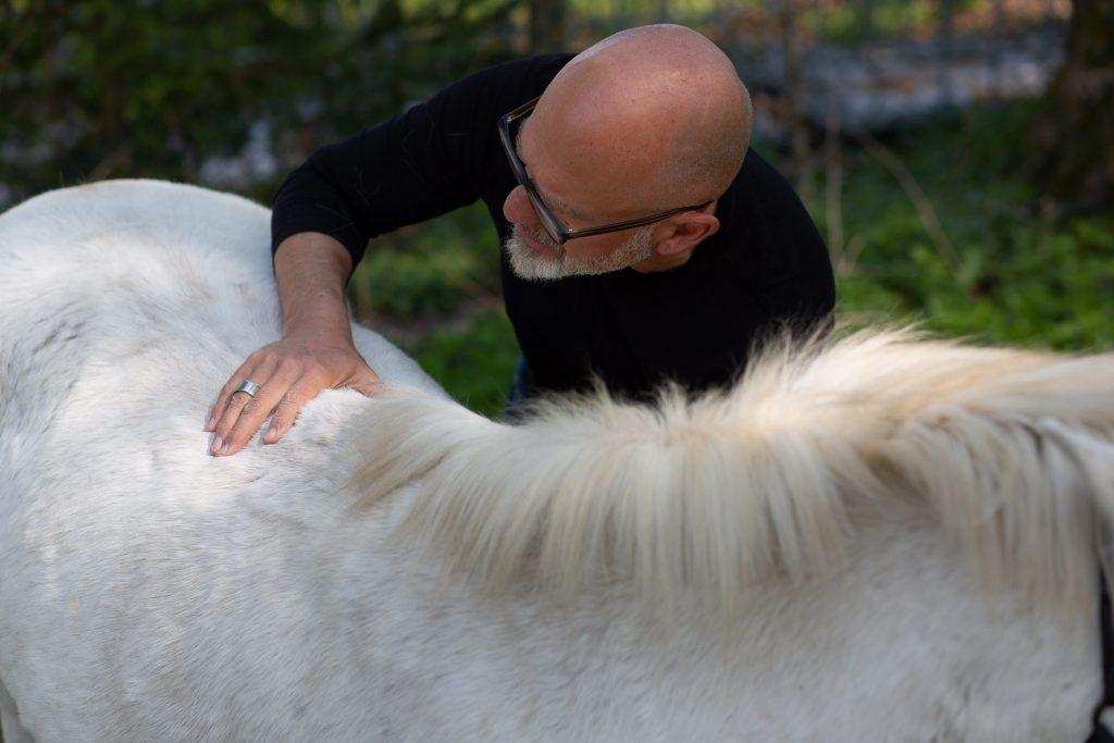 Physiotherapie für Pferde